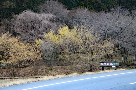 1 星野 四季の森.jpg