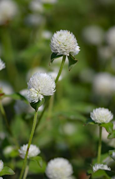 16 花.jpg
