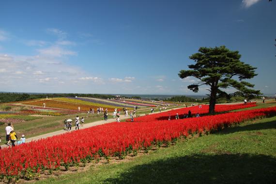 8 ふるるの丘.jpg