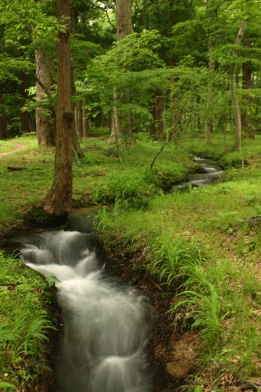 水林自然林2.JPG